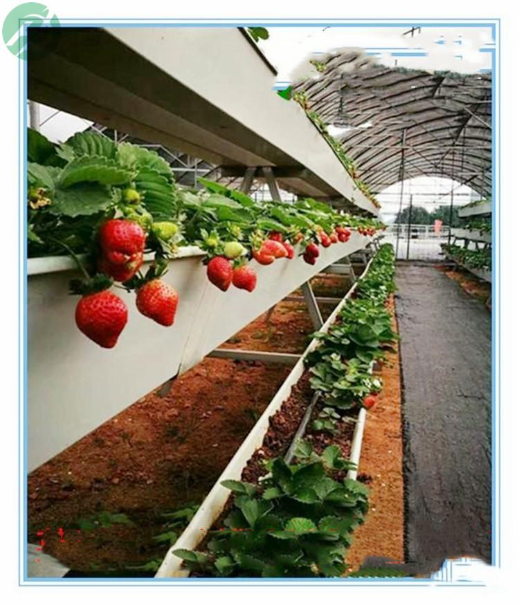 基地批发 加厚种植槽 草莓A字架 质优价廉