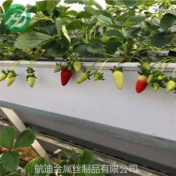 怎样种植草莓产量高