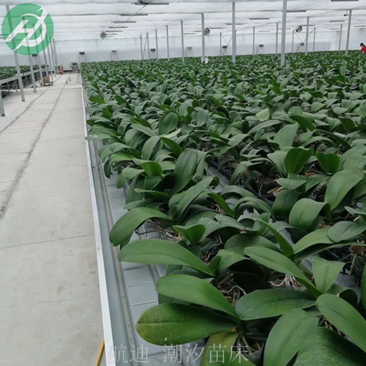 温室种植使用潮汐苗床好处-灌溉栽培技术