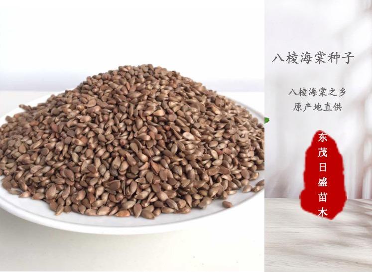 2021年八棱海棠种子价格新产种子