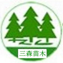 陕西供应绿化苗木