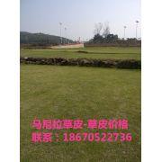 郴州市苏仙区兰兰绿化草皮小苗种植基地