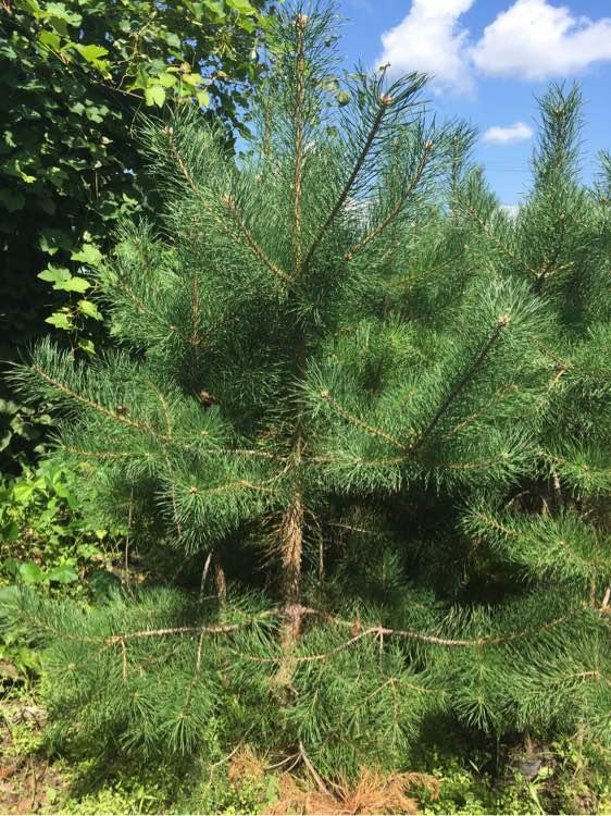 绥化市黑森林木种苗繁育基地