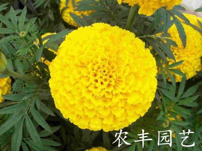 元宝山区农丰园艺场