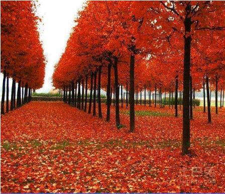 九江风景林木种苗有限公司