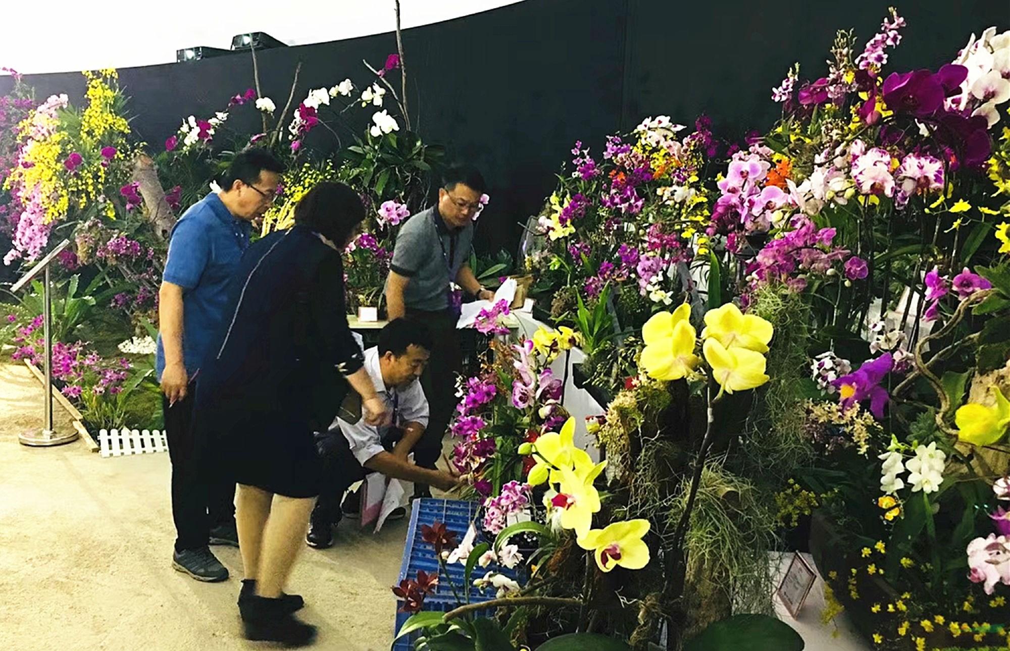 花香中国梦 绽放新时代 2019首届三亚国际花卉旅游节开幕