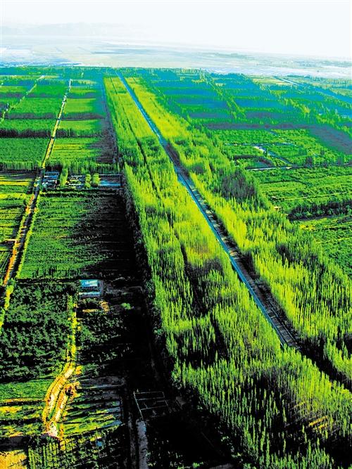 「betway必威体育亚洲」新疆农田林网建立保障农业丰登