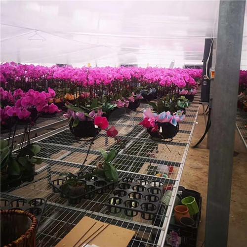 温室花卉苗床