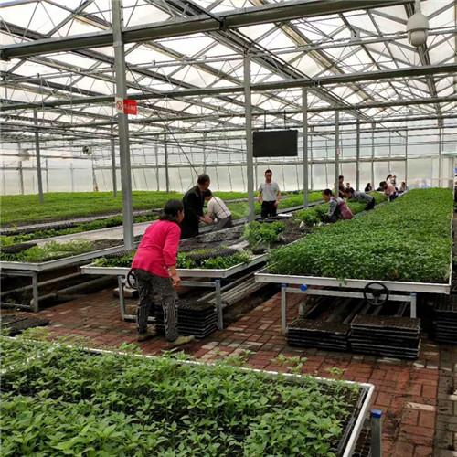 温室育苗床系统