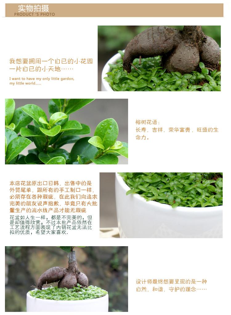 仙桃花卉绿植批发 仙桃常青花卉园艺首选