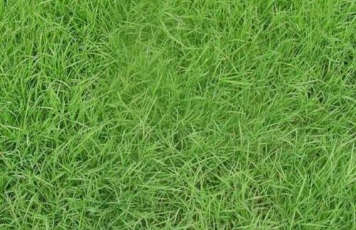 草块建坪注意事项