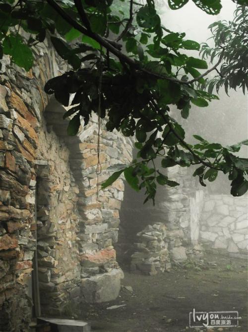 新郑具茨山发现两棵百年皂角树