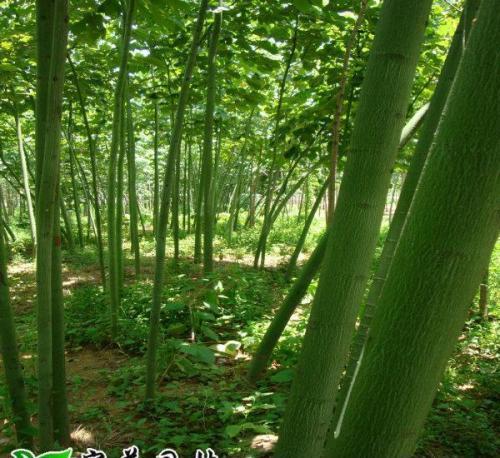 """把""""森林""""搬进城区 孝感市园林绿化提档升级"""
