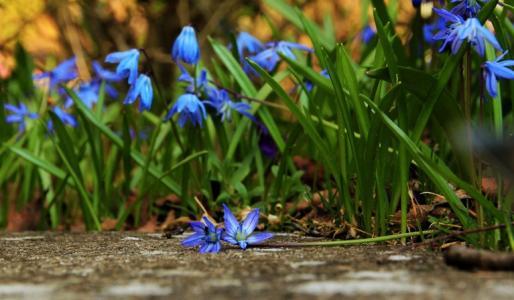 开花|落花|落蕾