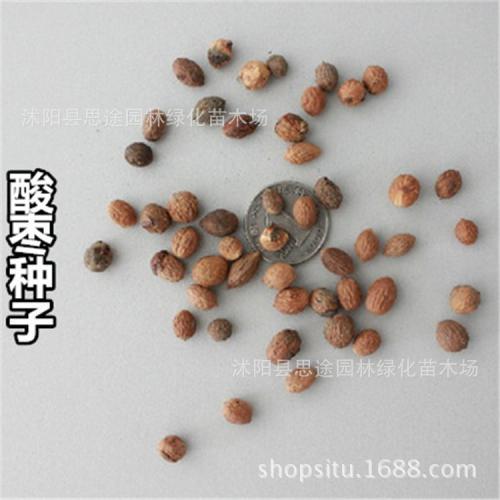 如何鉴定酸枣种子生活力?