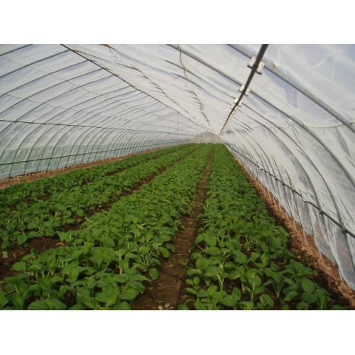 无公害蔬菜防虫新技术