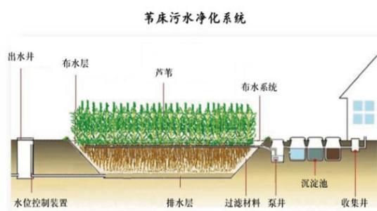 芦苇生产技术