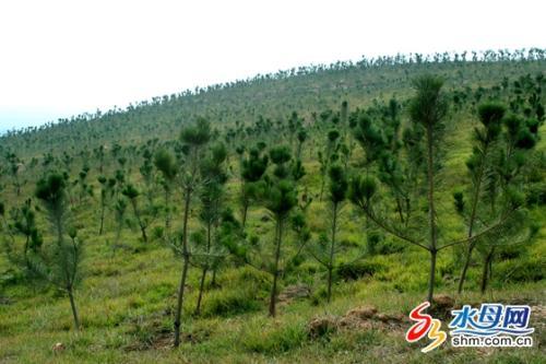竹柏的造林技术