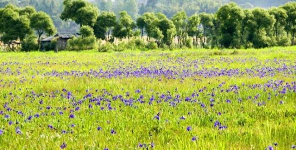 保持生态平衡的草种月见草