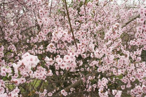 四川:宜宾县1000高榕树连衣裙万盆鲜花朵朵送香港的城市核心