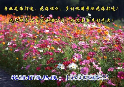 江苏茉莉,迎春花价格较新价格查询2013年9月11日