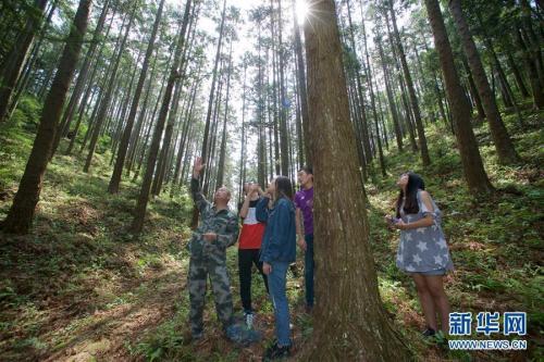 tian林一林广西农业杉木销售收入超过100,000