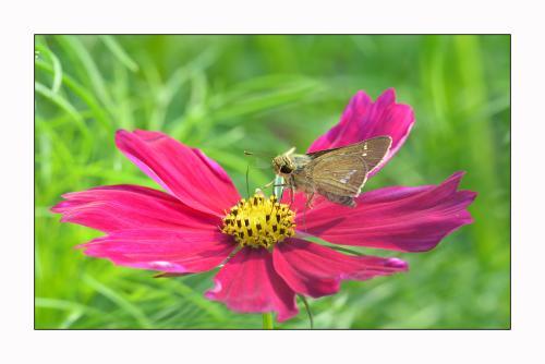 什么柏树蛾的危害和预防方法