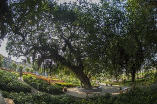 """福州:未来或""""榕园"""",""""榕树一条街"""""""