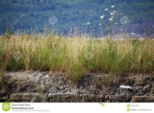 山东:垦利县盐克服了大规模的植树造林问题