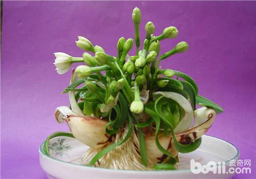 水仙花造型后诱导根生长的方法