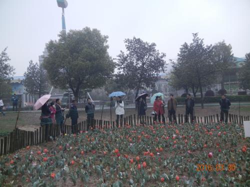 """娄底:石马公园精心打造""""花海公园"""""""