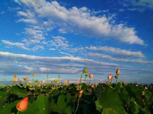 金华:如何圆国家湿地公园之梦?
