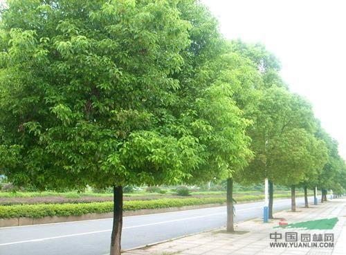"""江西:樟树发展升级追求""""绿富美"""""""