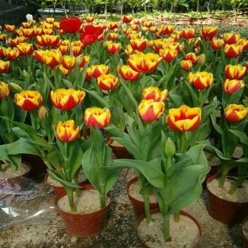 广东:荒坡地亩均增2万年花卉产值超6亿