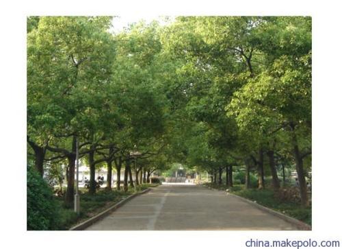 """江苏淮安快速路一期即将动工 沿线绿化树""""搬家"""""""