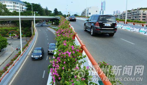 福州22个路口将进行绿化提升改造 新增种190多棵大榕树