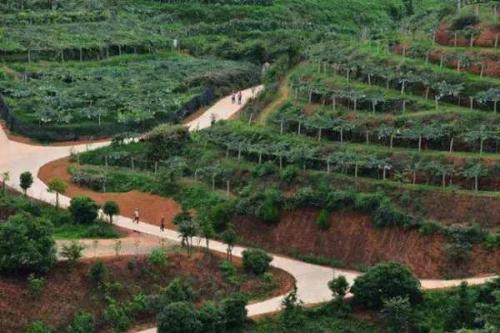 江西樟树:种植花卉苗木 扮靓遗址公园