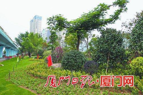 厦门:红花绿树添彩鹭岛春意渐浓