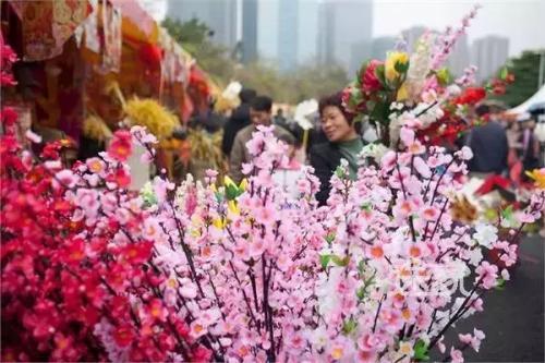 """天津迎春花市引进""""洋美人"""" 市民用手机就可逛花市"""