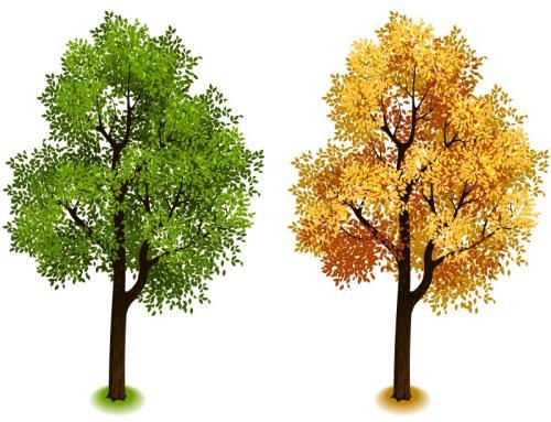 """淮安:发展珍贵用材树种培育""""高富帅""""树木"""