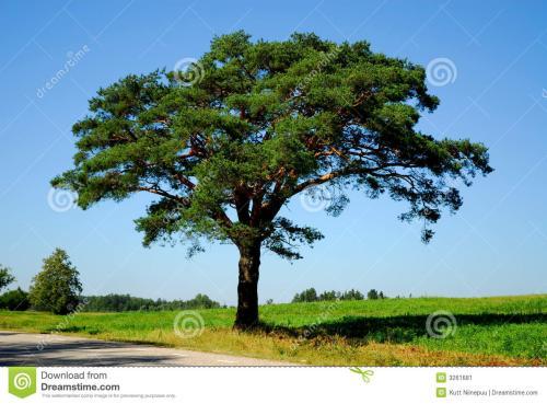 为省育林费用 男子无证砍伐271株杉木树获刑两年