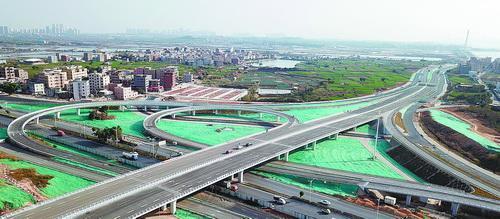 """厦门滨海东大道采用""""无地被""""绿化"""