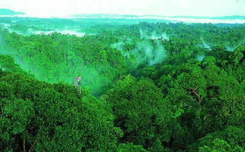 4000万年前西藏中部曾是热带雨林