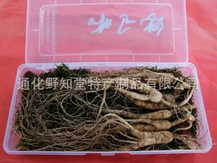出售鲜野山参,批发精装苔藓保护野山参,出售14年以上鲜野山参.