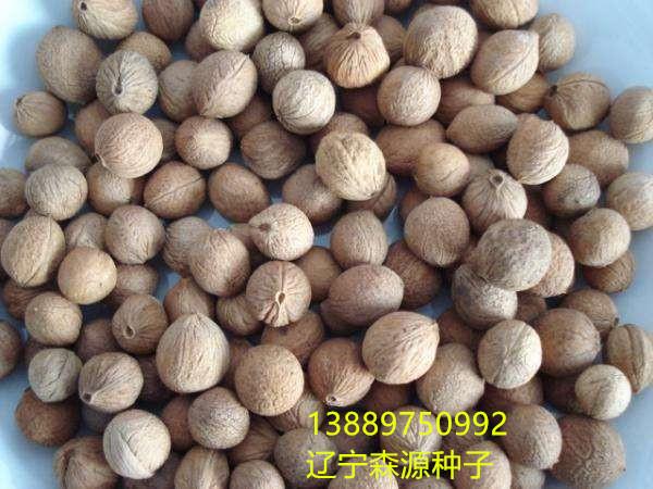 辽宁省榆叶梅种子小桃红种子