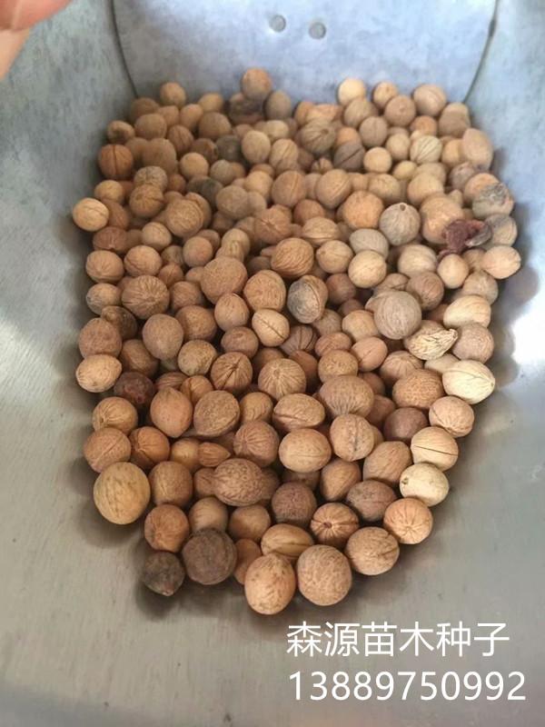 辽宁省榆叶梅种子多少钱一斤