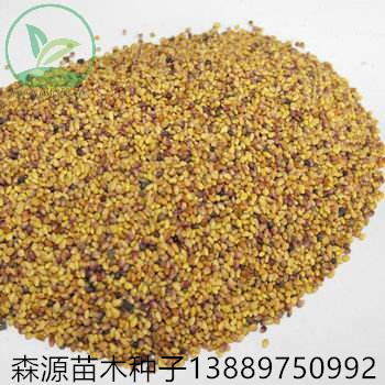 辽宁省红三叶种子多少钱一斤