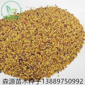 红三叶种子批发价格多少钱