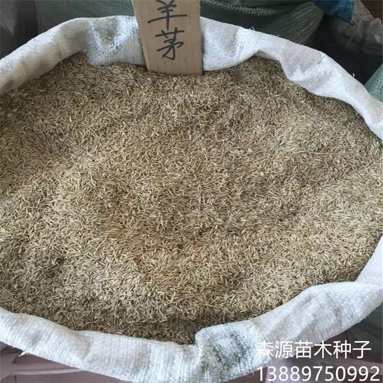 高羊茅种子批发价格多少钱