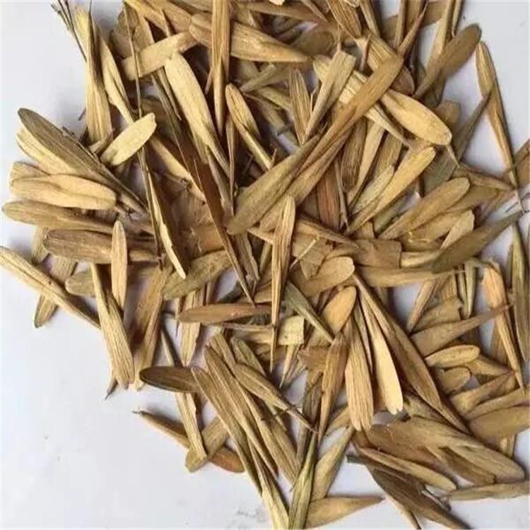 出售 白腊种子 今年下树 白蜡种子 新货